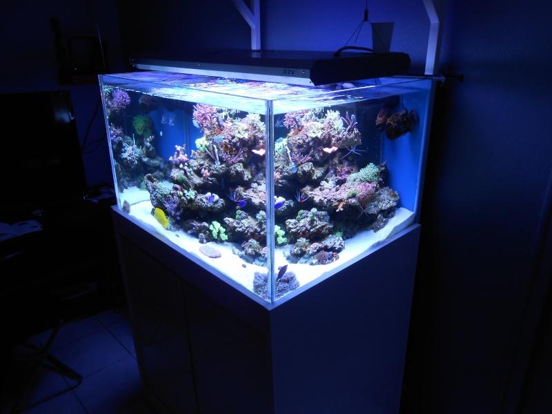 karlito's reef 2 - Page 2 Dscn0018