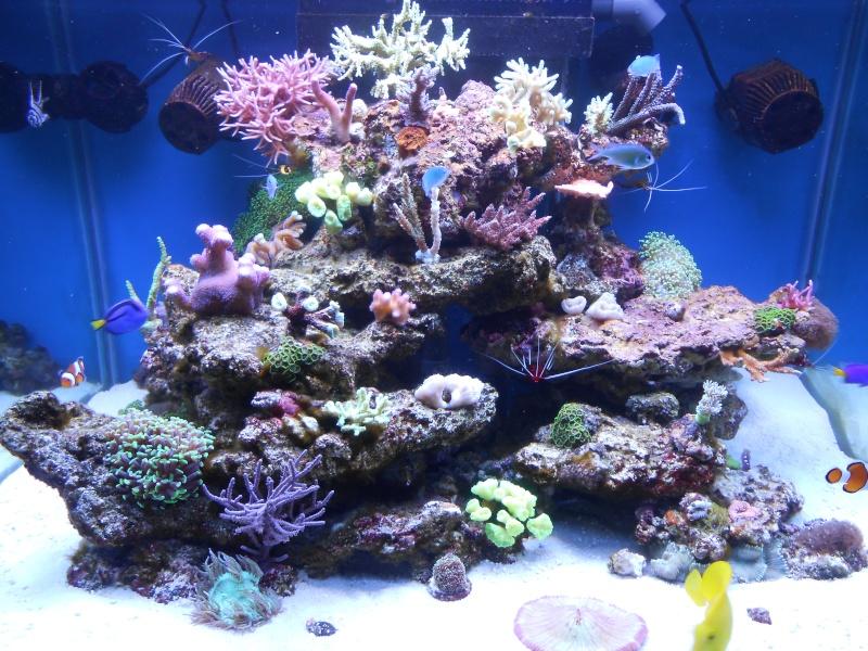 karlito's reef 2 - Page 2 Dscn0019