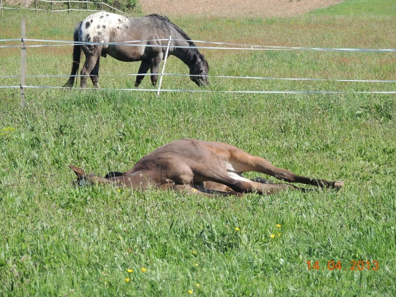 Mes chevaux, un mélange d'un peu tout le monde! - Page 5 Choomy28