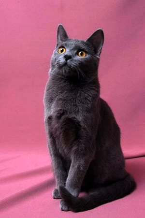 Le Chartreux Abbaye10