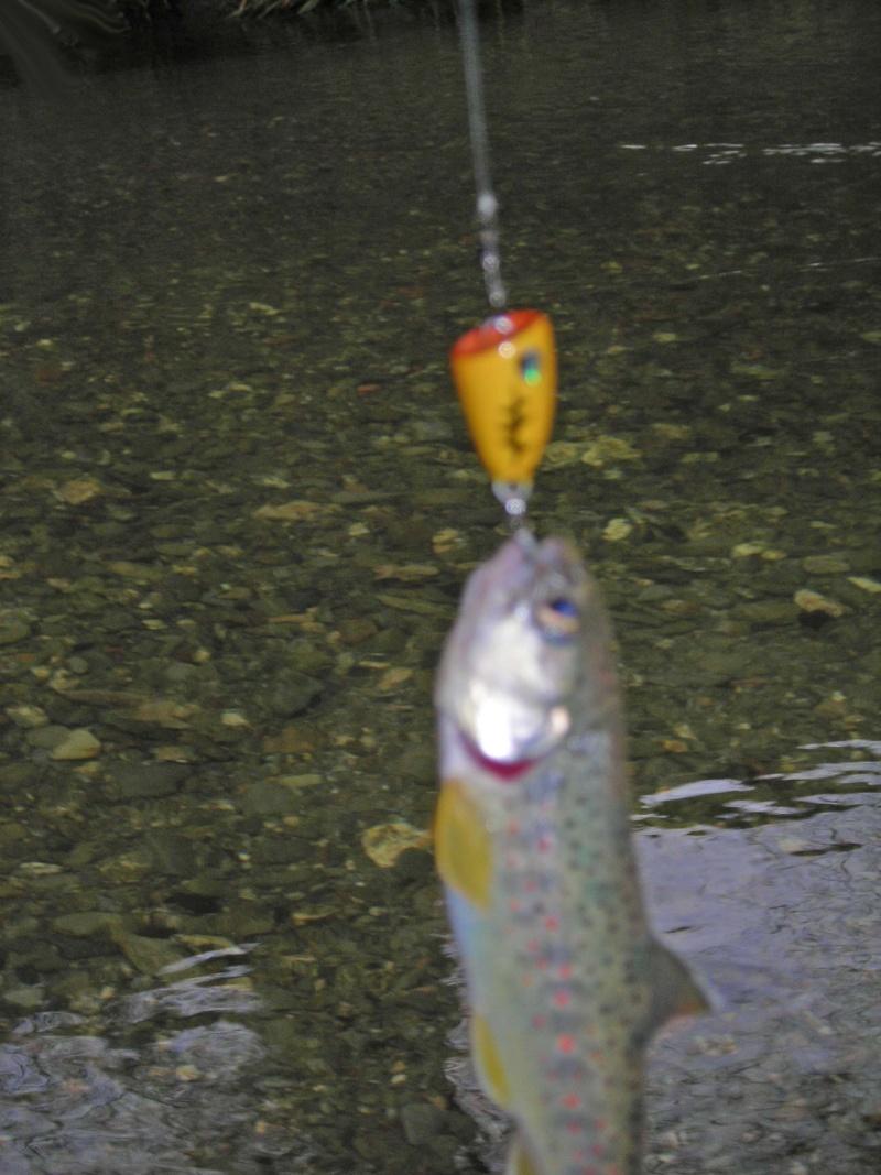 Trout on Popper! ... is it possible????? Dscn5515
