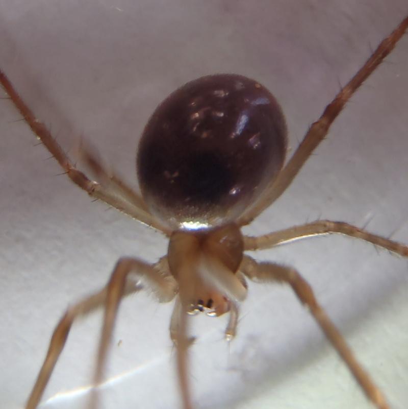 araignée a identifier P2040010