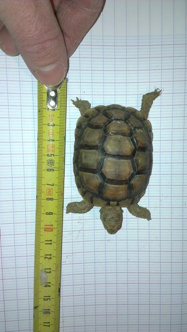 Petite tortue recueilli besoin d'infos Imag0017