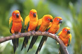 Sve vrste Ptica - Page 3 4010