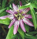 Cvetna oaza - Page 2 Hristo10