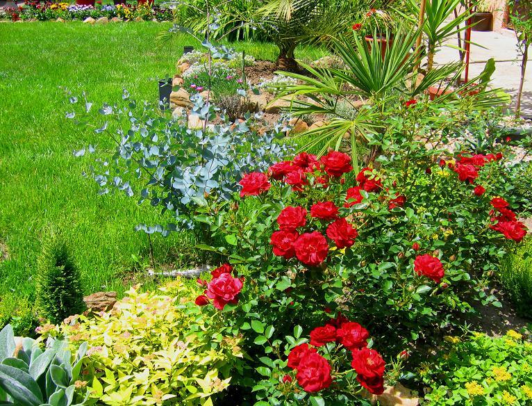 Cvetna oaza - Page 4 Ruze10