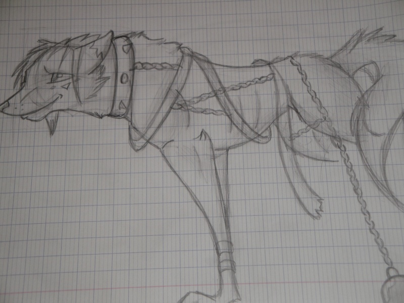 Dessin de Snow' Cheval13