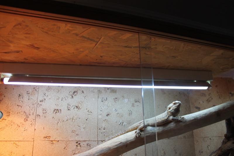 Installation d'un néon: comment faire ? Img_1235