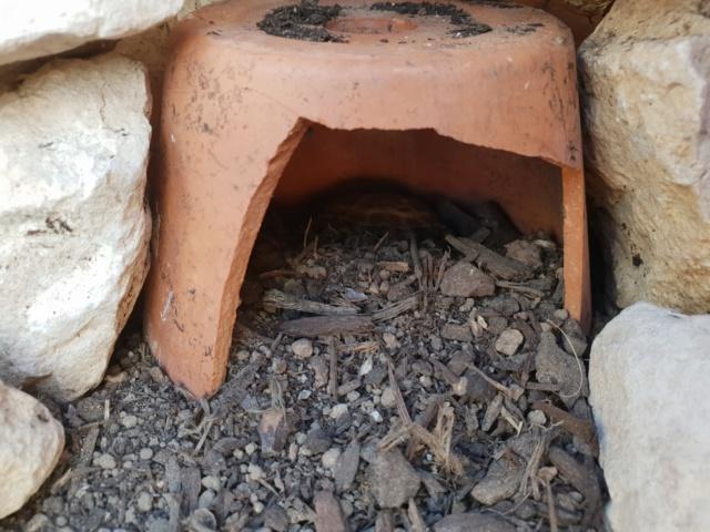 hibernation possible quand la tortue est dans un parc sur roulette? 20180813