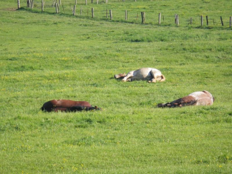 Thème de Mai 2013 : Le Cheval en pleine sieste!! Imgp0510