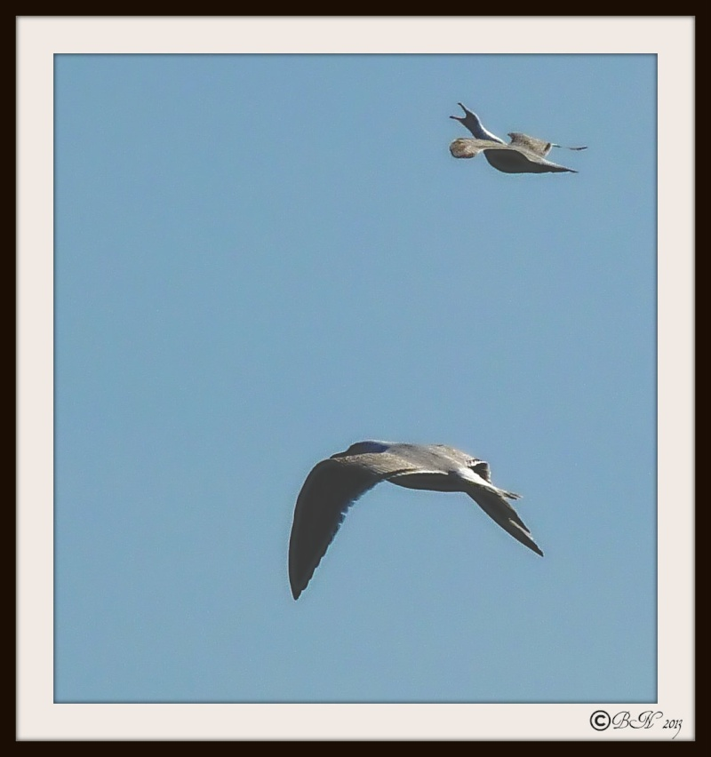 Jolis petits oiseaux... ou grands : 2ème partie - Page 15 P1360511