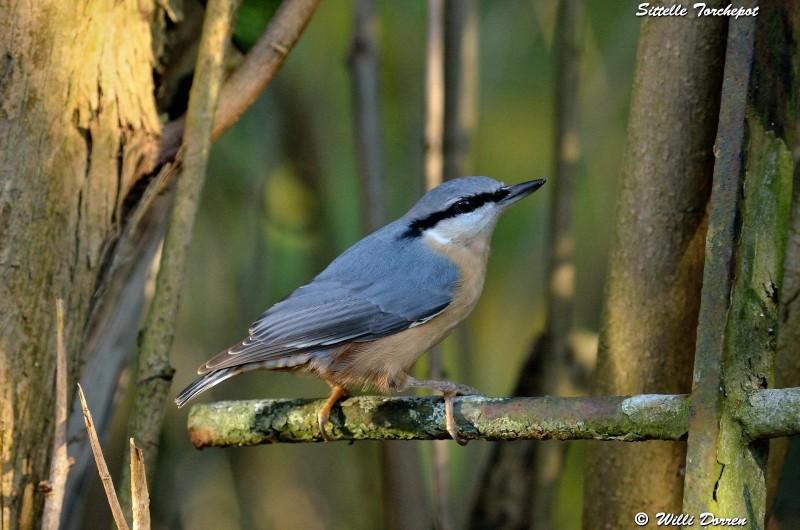les èspèces d'oiseaux que j'ai eux cet hiver 2012-2013 Dpp_oi30