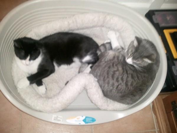 GUIZMO (Cassis, chaton mâle, né le 10 mai 2011, identifié 250269604305582) - Page 8 27000511