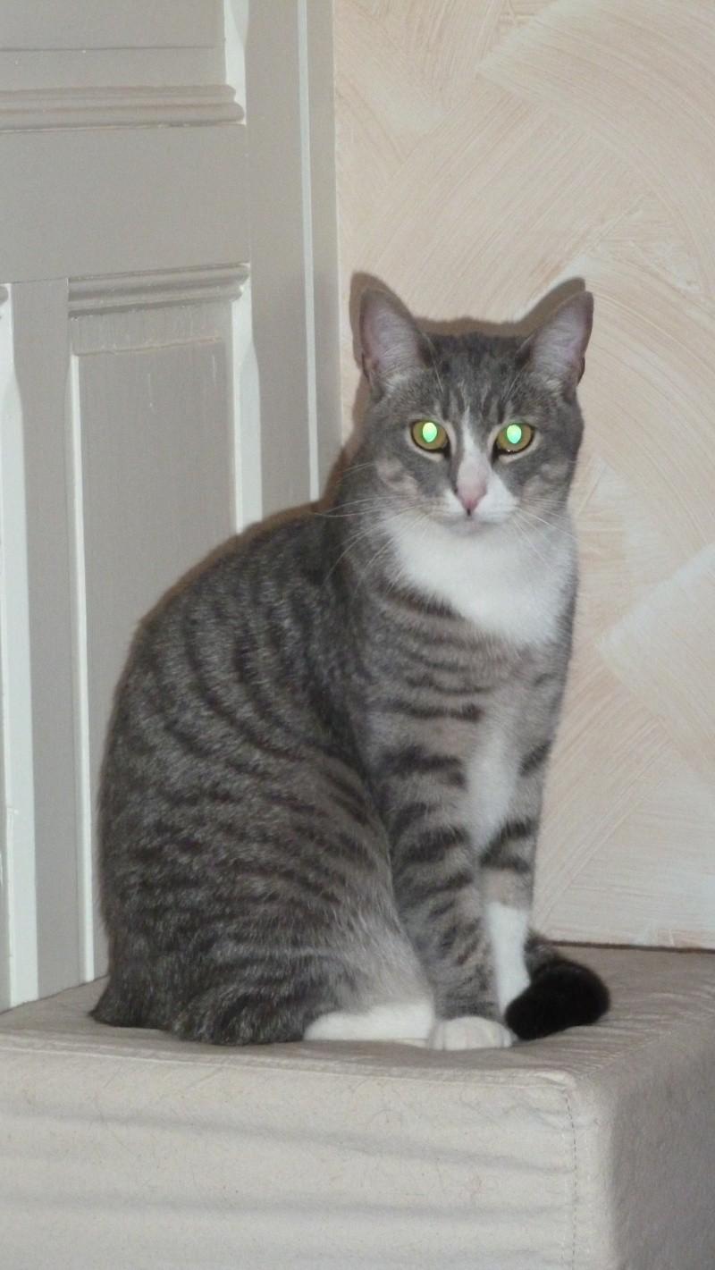 GUIZMO (Cassis, chaton mâle, né le 10 mai 2011, identifié 250269604305582) - Page 8 P1010511