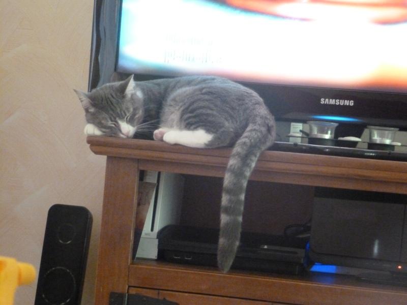 GUIZMO (Cassis, chaton mâle, né le 10 mai 2011, identifié 250269604305582) - Page 8 P1010710