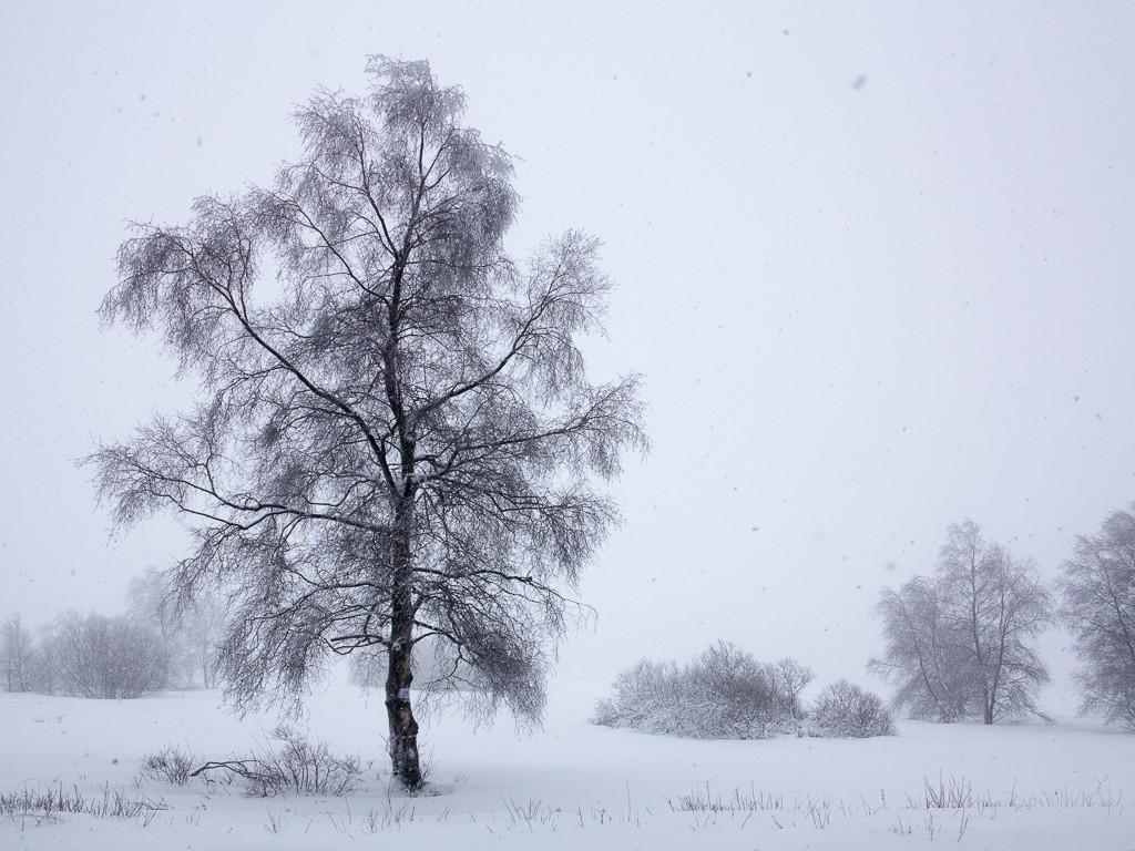 Sortie hivernale en Hautes Fagnes (BE) -g1x_110