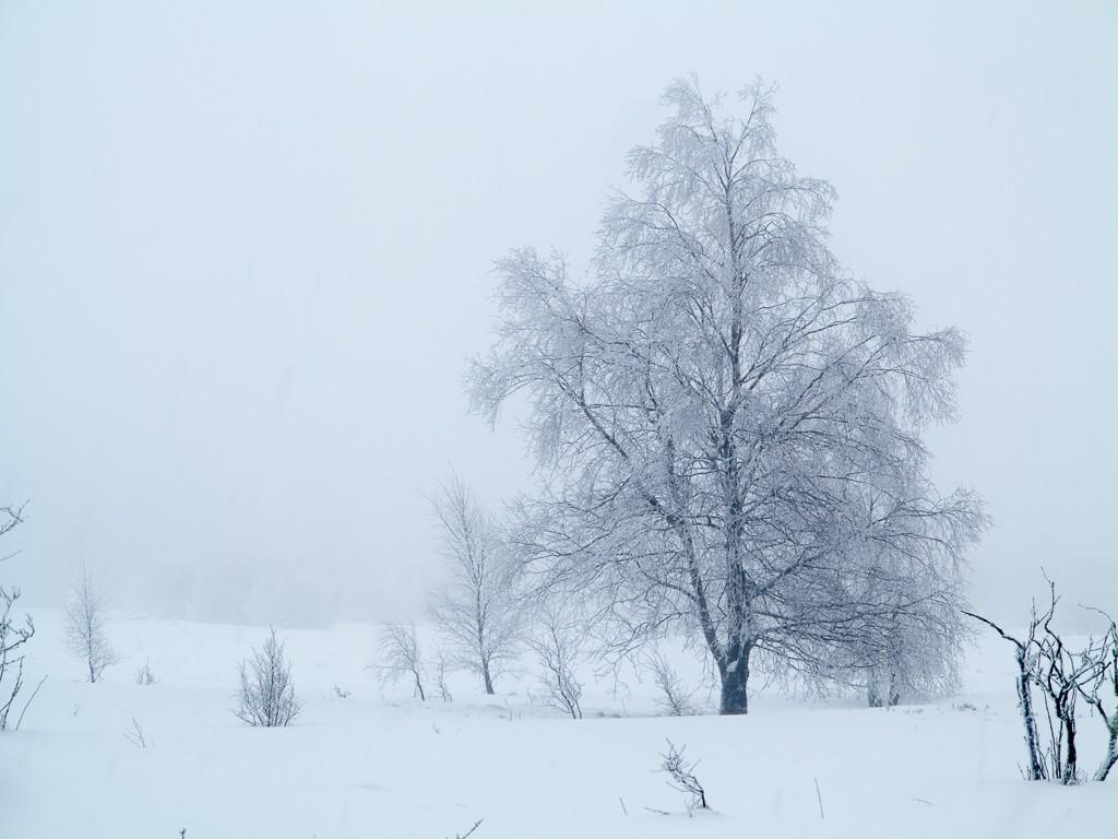 Sortie hivernale en Hautes Fagnes (BE) -g1x_111
