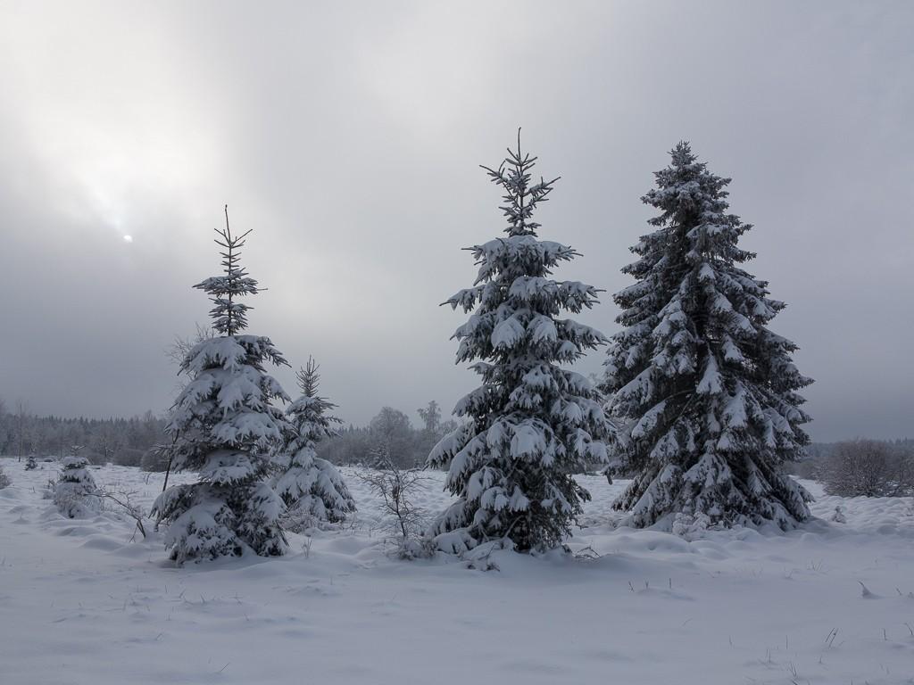 Sortie hivernale en Hautes Fagnes (BE) -g1x_113