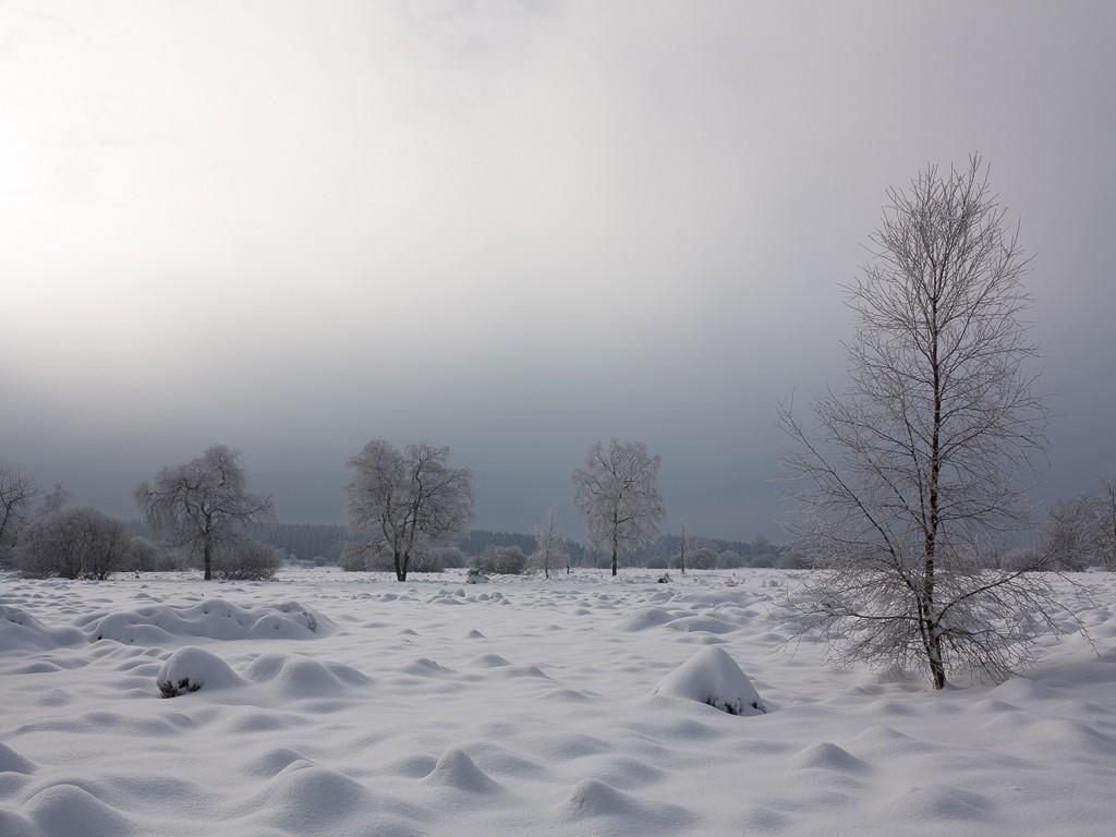 Sortie hivernale en Hautes Fagnes (BE) -g1x_114