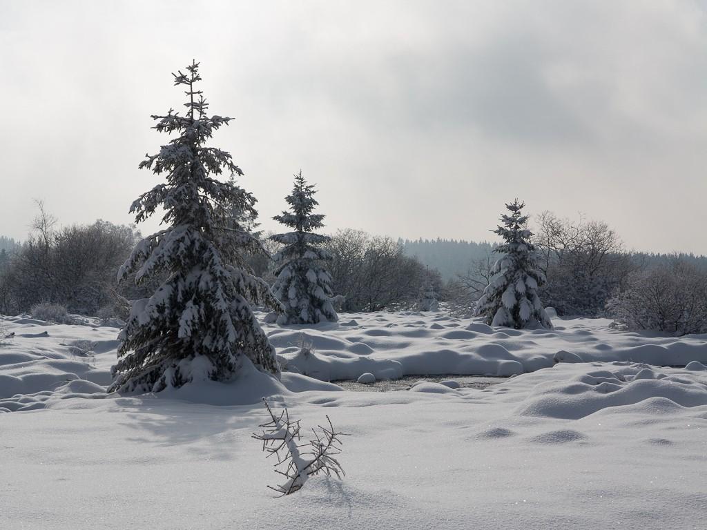 Sortie hivernale en Hautes Fagnes (BE) -g1x_115