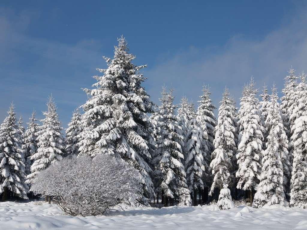Sortie hivernale en Hautes Fagnes (BE) -g1x_116