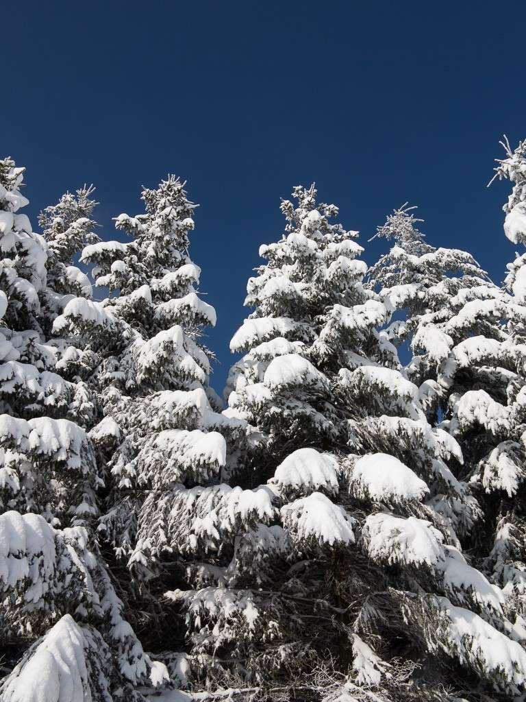 Sortie hivernale en Hautes Fagnes (BE) -g1x_117