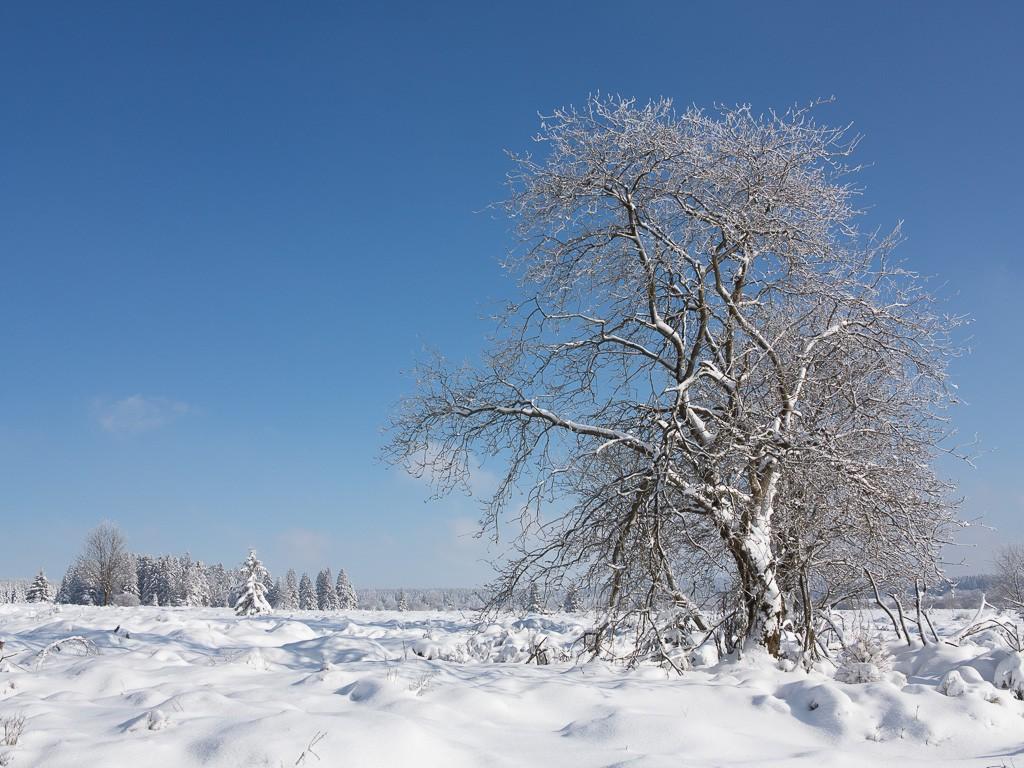 Sortie hivernale en Hautes Fagnes (BE) -g1x_118