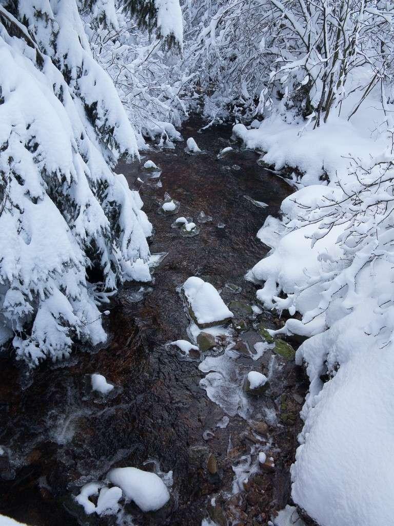 Sortie hivernale en Hautes Fagnes (BE) -g1x_119
