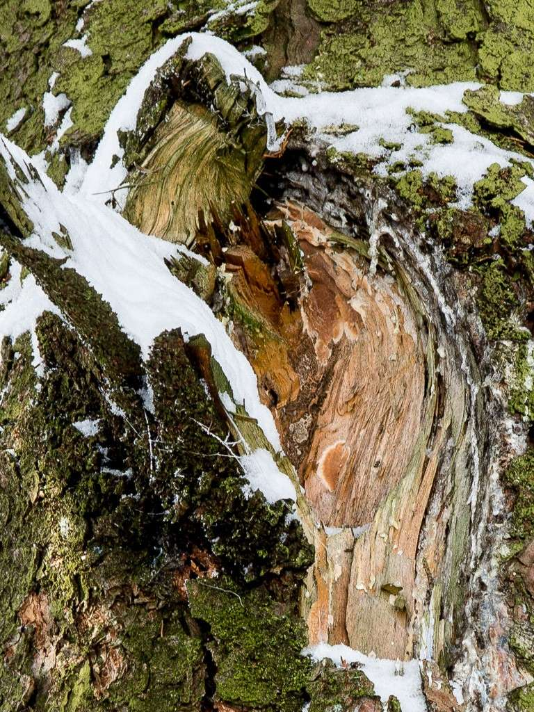 Sortie hivernale en Hautes Fagnes (BE) -g1x_121