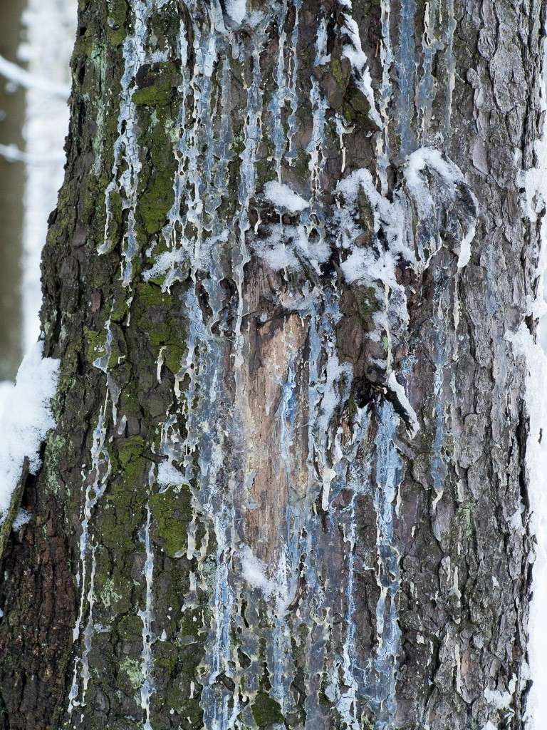 Sortie hivernale en Hautes Fagnes (BE) -g1x_123