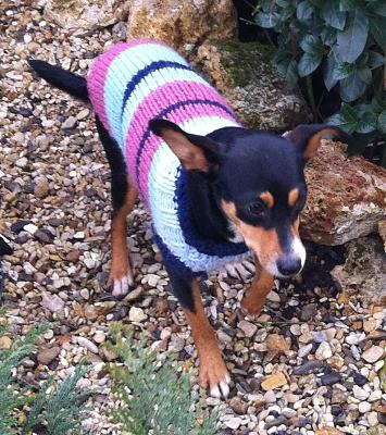 Adoption Savana x pinscher femelle d'un an (75) Image12