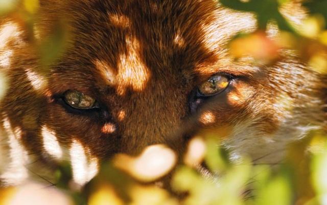 créer un forum : chasse-goupile - Portail Les_ye10