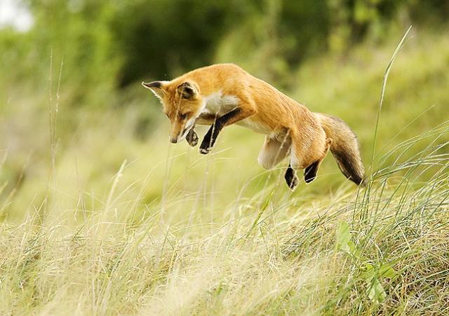 créer un forum : chasse-goupile - Portail M6338o10