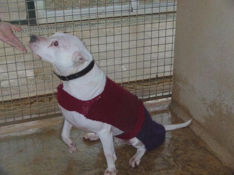 Présentation de manteaux tricotés par pepette Dvci0010