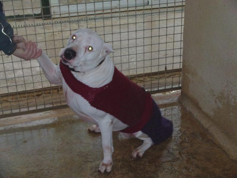 Présentation de manteaux tricotés par pepette Dvci0011
