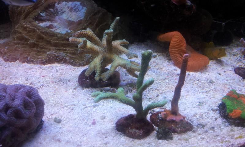 """Mon nouvel aquarium """"david59"""" - Page 10 2013-013"""