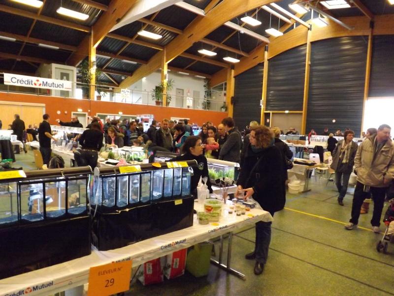 Bourse de l'Aqua96 le 17 février 2013 à Dossenheim(67) - Page 2 Dscf1310