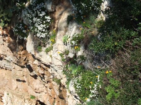 (06) Cap d'Antibes et parc de la Villa Eilenroc Dscf3620
