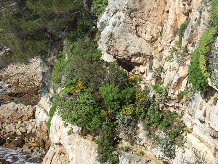 (06) Cap d'Antibes et parc de la Villa Eilenroc Dscf3621