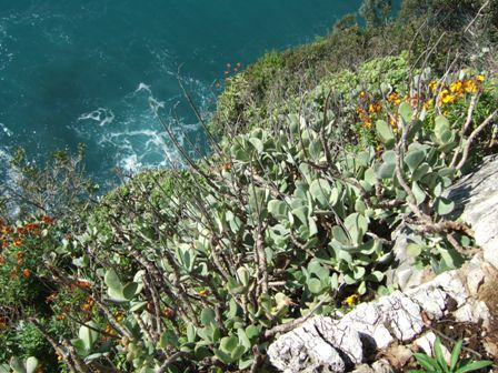 (06) Cap d'Antibes et parc de la Villa Eilenroc Dscf3622