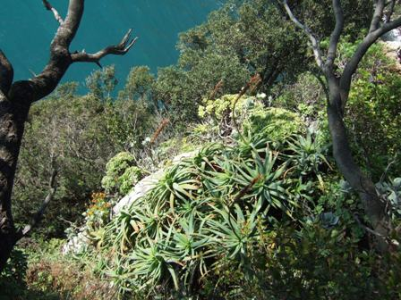 (06) Cap d'Antibes et parc de la Villa Eilenroc Dscf3623