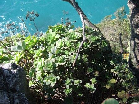 (06) Cap d'Antibes et parc de la Villa Eilenroc Dscf3624