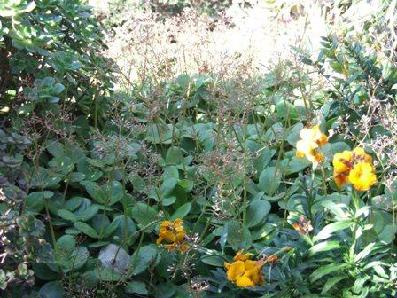 (06) Cap d'Antibes et parc de la Villa Eilenroc Dscf3625