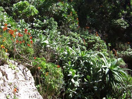 (06) Cap d'Antibes et parc de la Villa Eilenroc Dscf3626