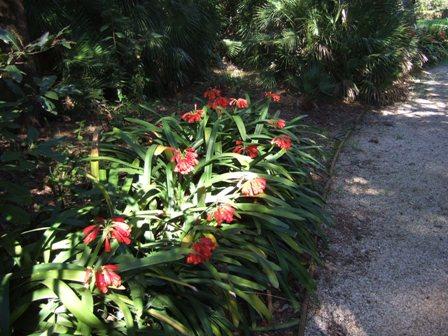 (06) Cap d'Antibes et parc de la Villa Eilenroc Dscf3628