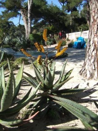 (06) Cap d'Antibes et parc de la Villa Eilenroc Dscf3629