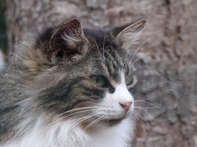 Les mamies et papis chats à l'adoption :) P1020910