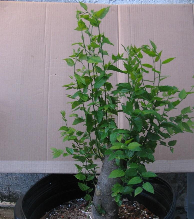 What fertilizer should I use? Big_ha10