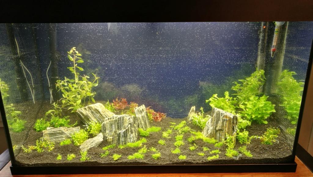 Lancement aquarium 120 litres Img_2010