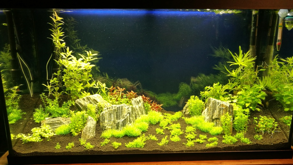 Lancement aquarium 120 litres Img_2011